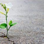 «No pierdas la esperanza de un futuro mejor». El mensaje de un sacerdote a todas las naciones